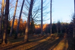 Saupark 1 1 1400